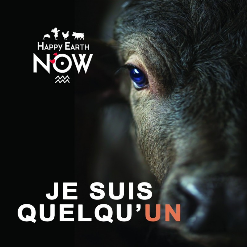 """Autocollant Happy Earth NOW - """"Je suis quelqu'un"""" - Vache"""